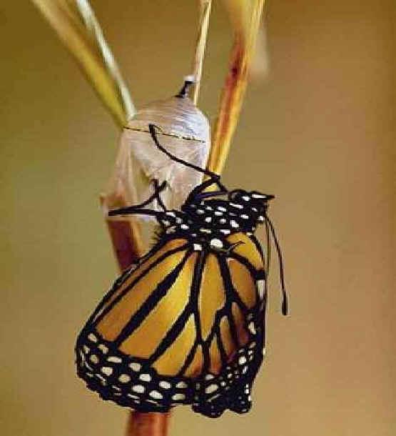 داستان کوتاه انگلیسی butterfly با ترجمه به فارسی