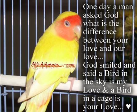داستان کوتاه انگلیسی The bird and the cage باترجمه فارسی