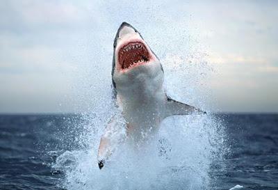 داستان کوتاه انگلیسی A shark inside us با ترجمه فارسی